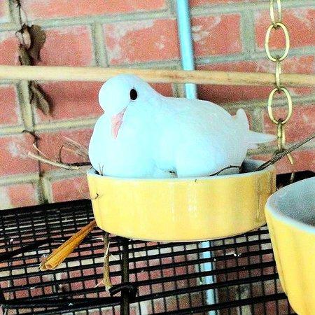 Charlotte Nature Museum: white dove