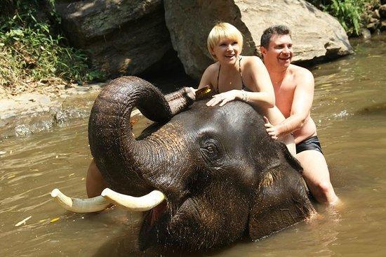 Patara Elephant Farm - Private Tours : La promenade et le nettoyage