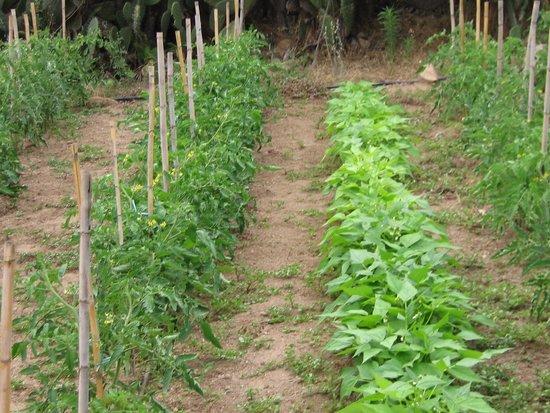Agriturismo Monti Tundu: L'orto cresce a Montitundu