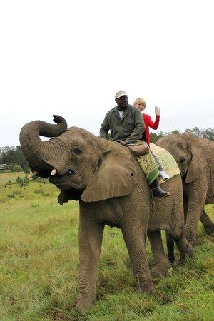 Knysna Elephant Park: Sur mon éléphante Keisha