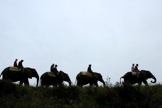 Knysna Elephant Park: La promenade à l'aube : paysages merveilleux