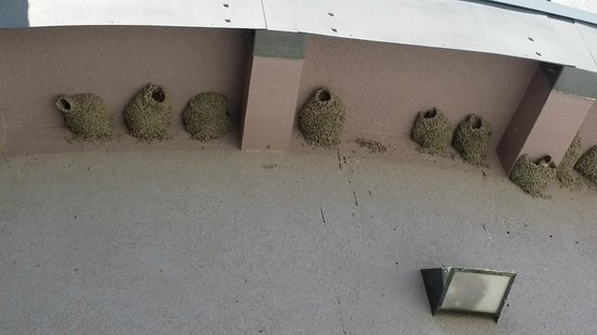 Mono Basin Scenic Area Visitor Center: The Mud Swallows have bee very busy - out the back door of the center