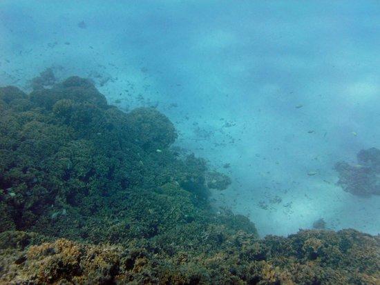 Coral Gardens: Coral head