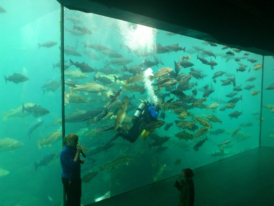 Atlantic Sea Park: One of the aquaria, explanation by guide and feeding experience