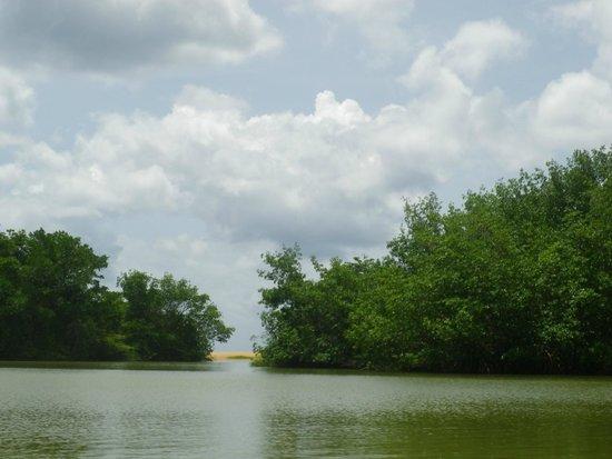 MKG Centre Nautique : mangrove au fond la plage