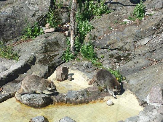 Korkeasaari Zoo: Korkeasaari