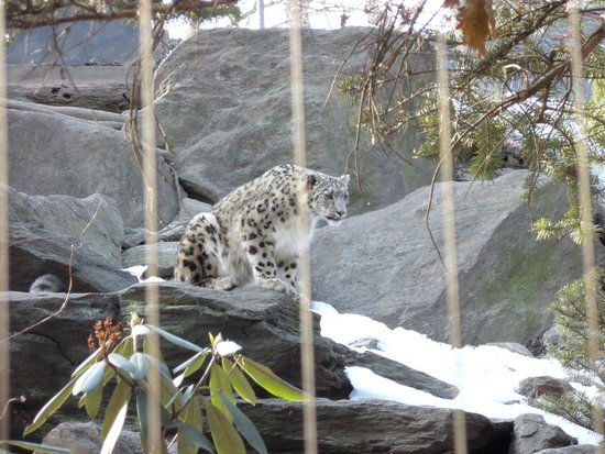 Bronx Zoo : good day out