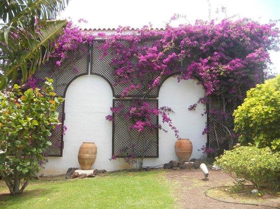Fuerteventura Princess : Hotel garden