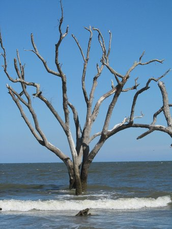 Hunting Island State Park Campground: Beach