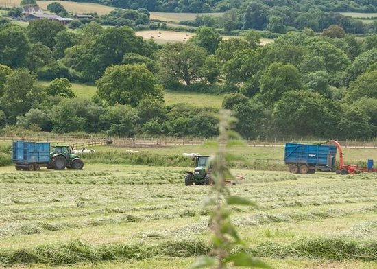 View of farming in June from Fairways Bed and Breakfast Crewkerne Somerset www.fairwaysbandb.co.