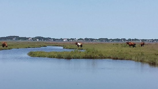 Assateague Island National Seashore: On the way into the park