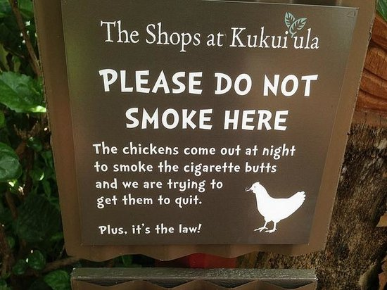 Bubba Burgers : Ha .. Spare the chickens, they addicts ...