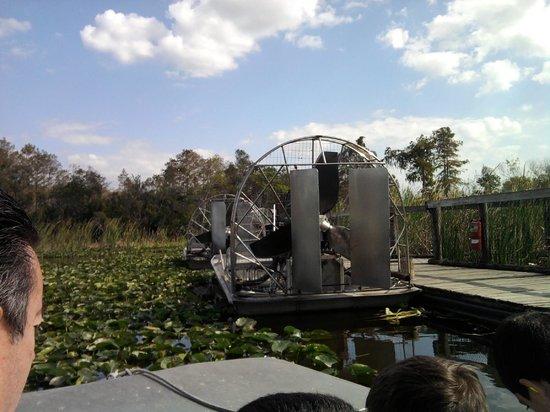 Billie Swamp Safari: airboat ride