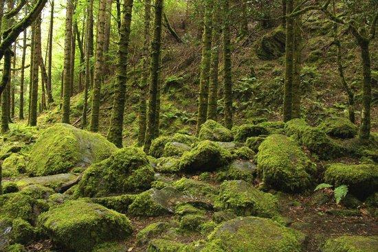 Friars Glen : Torc Water fall hike