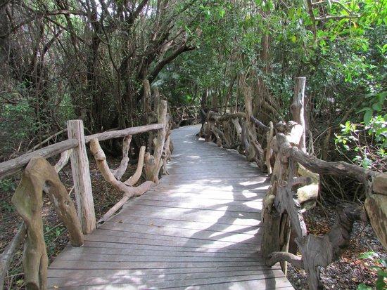 Sandos Caracol Eco Resort : Xcalacoco