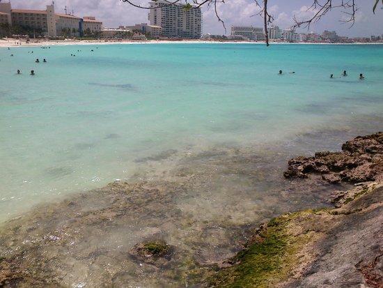 Club Regina Cancun: arrecife
