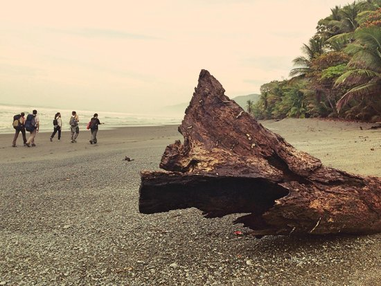 Surcos Tours: Corcovado NP hike