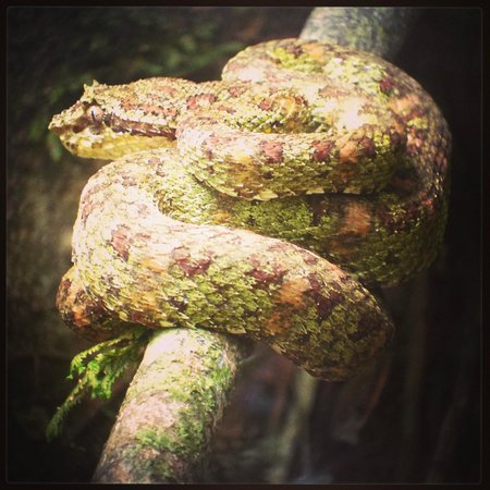 Surcos Tours: Corcovado NP wildlife