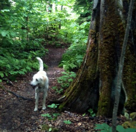 Alpenrose Bed and Breakfast : Roxy knows all the best trees to explore.