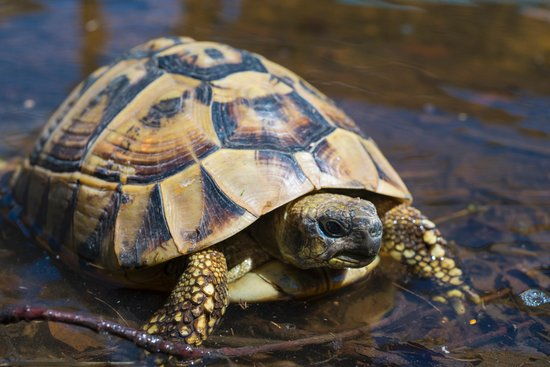 Bed & Breakfast l'Adele: la mamma tartaruga