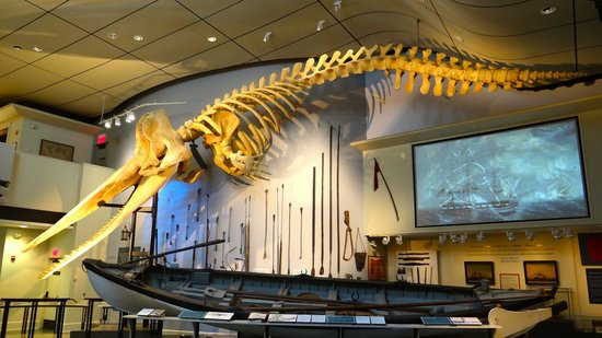 Whaling Museum
