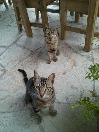 Don Alex: Голодные коты