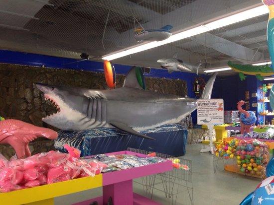 South of the Border: Myrtle beach shop's shark