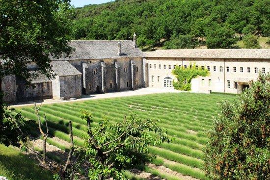 Abbaye Notre-Dame de Sénanque : Campi lavanda
