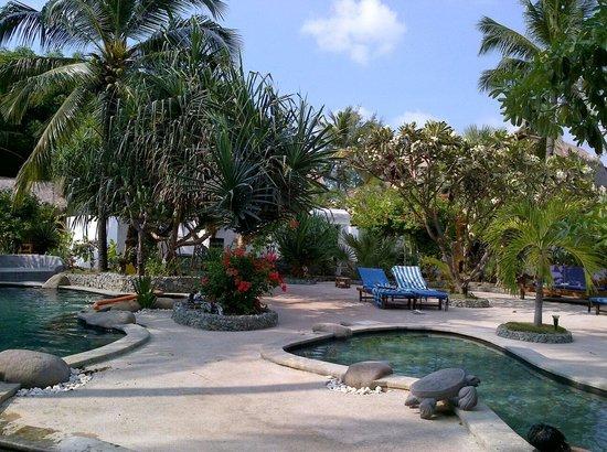 Sunrise Resort: A nice pool area ♥