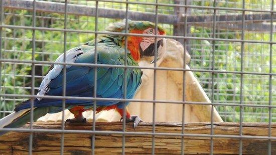 Parc Zoologique de Frejus : Ara
