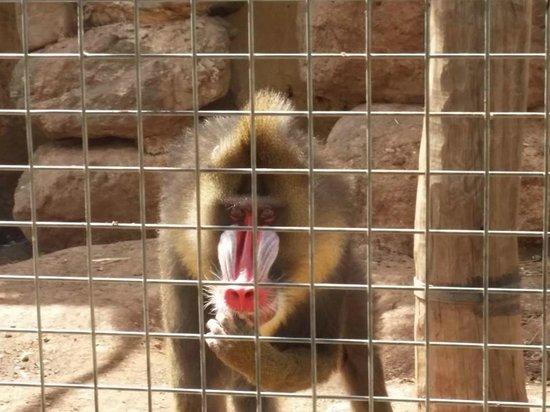 Parc Zoologique de Frejus : Babouin