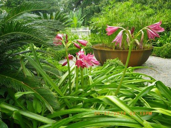 Laura Plantation: Louisiana's Creole Heritage Site: Garden