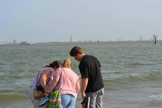 Galveston - Port Bolivar Ferry: Discovering Sea Life and Sea Shells