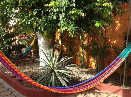 Hotelito Swiss Oasis : Lots of hammocks to relax in.