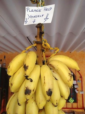 Hotelito Swiss Oasis : An example of the kindness - free bananas from the tropical garden.