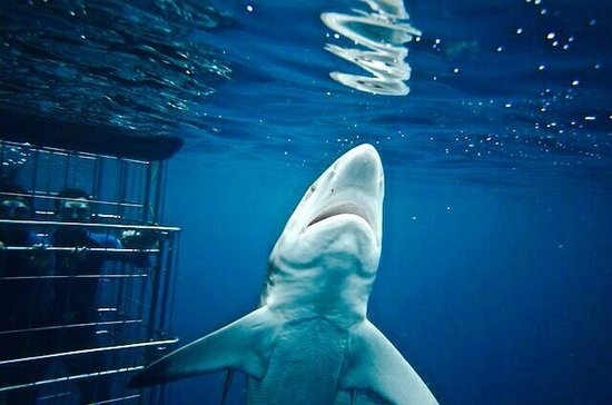 Shark Cage Diving KZN: i feel so close to you right now...