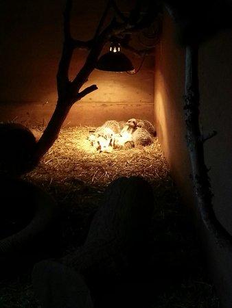 Woodlands Family Theme Park : Meerkats