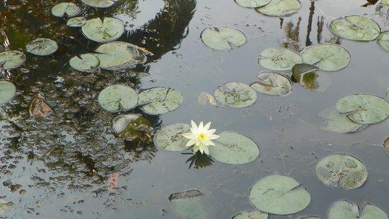 Jardim Botanico de Sao Paulo: Lago jardim botânico