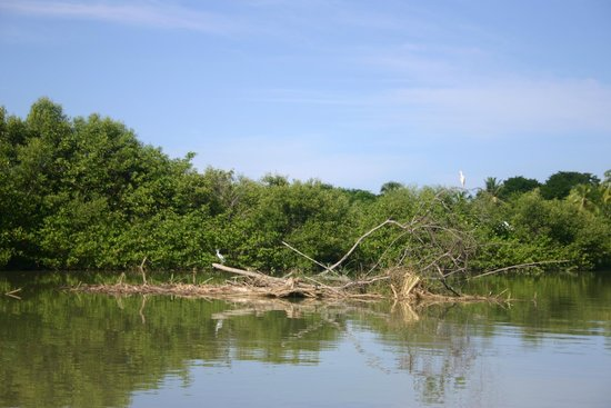 Costa Rica Jade Tours: Mangrove Boat Tour