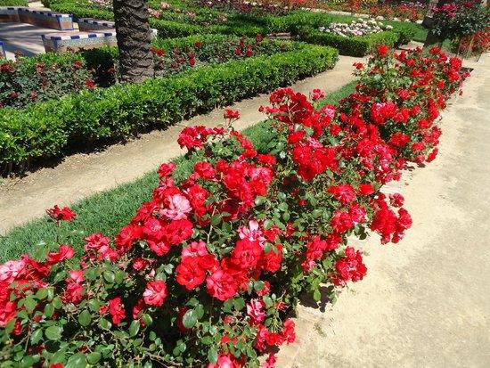 Parque de Maria Luisa: Colorido cuando estalla la primavera.