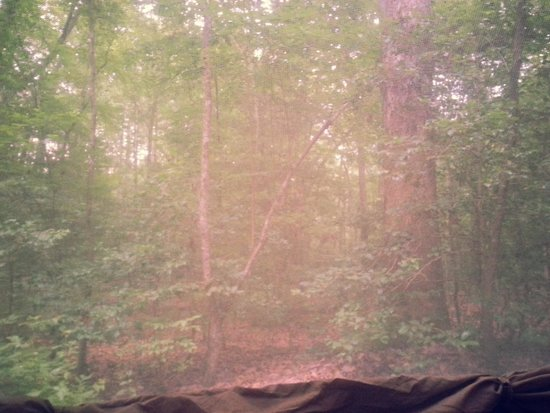 Merchants Millpond State Park : view from our tent