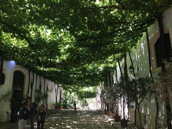 Bodegas Tio Pepe: great pathway