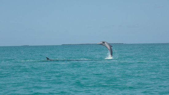 Take Me There Charters: dolphin watching
