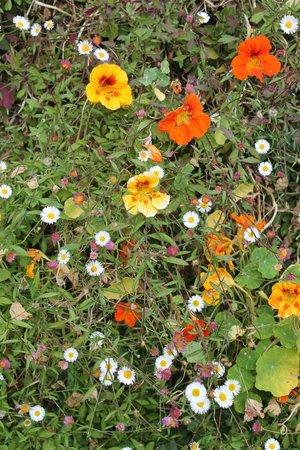 Jose do Canto Botanical Garden: wall of flower