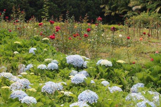 Jose do Canto Botanical Garden: rose garden