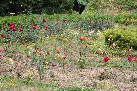 Jose do Canto Botanical Garden: happy place