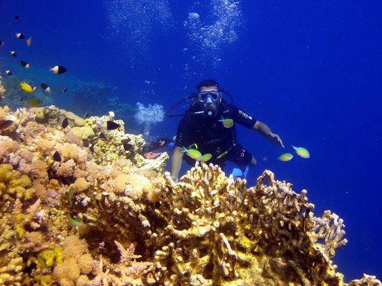 Camel Dive Club & Hotel: At diving time