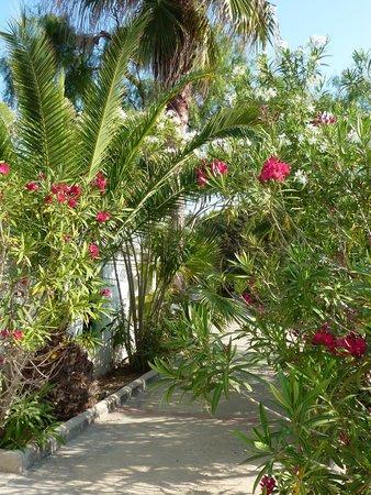 Hostal Sol i Mar: Le sentier fleuri qui mène au Can Mari
