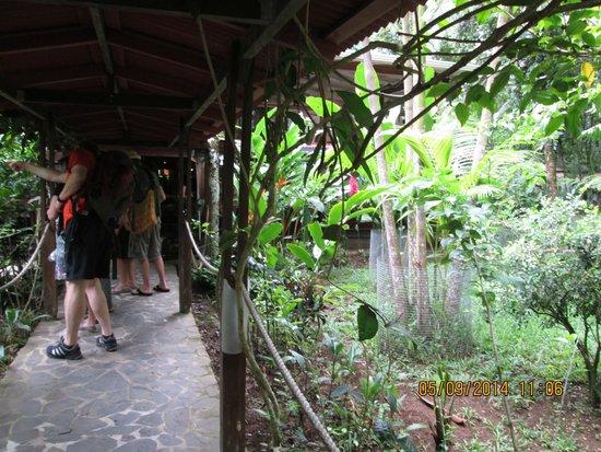 Fundación Jaguar Rescue Center: beautiful place