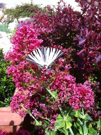 Agriturismo Santa Caterina : farfalla